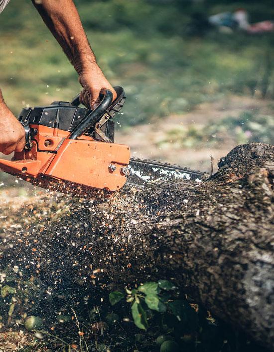 Заготовка и доставка дров любого размера
